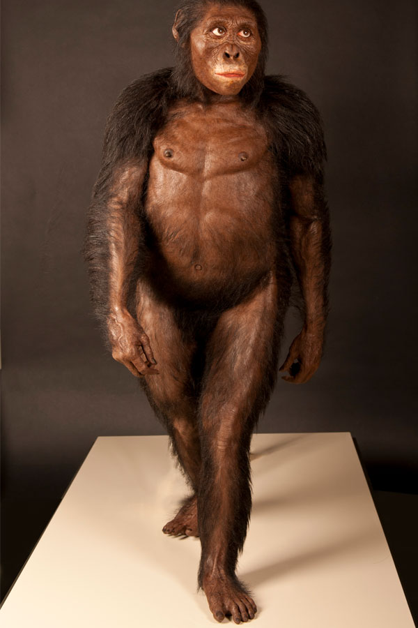 Lucy. Afbeelding: © John Gurche / Cleveland Museum of Natural History.