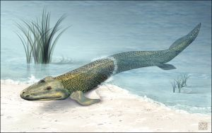 Tiktaalik: dit geslacht wordt door wetenschappers gezien als zogenaamde missing link tussen de vissen en de gewervelde landdieren.