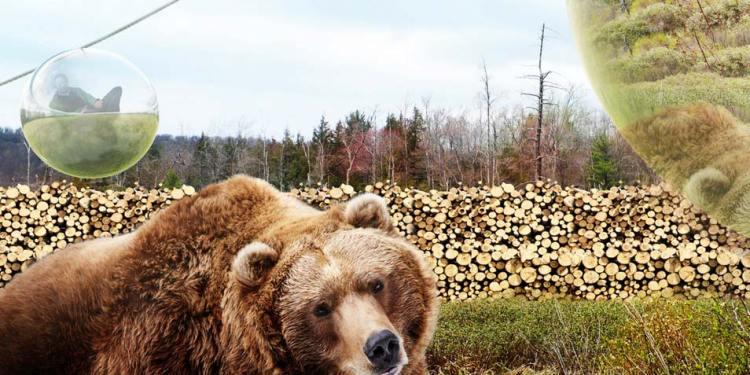 Zweven boven de beren. Afbeelding: BIG.