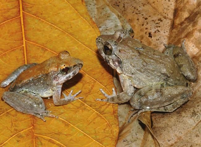 Links het mannetje, rechts het vrouwtje.
