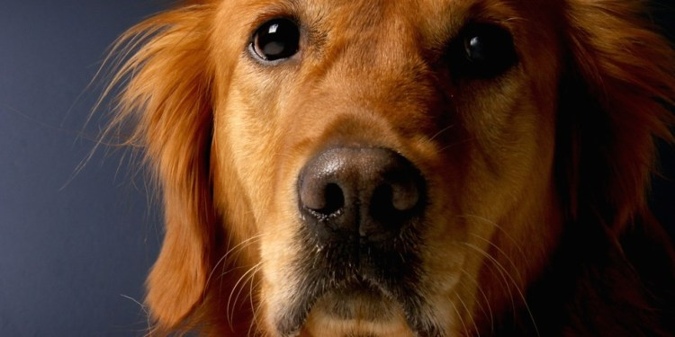 hond2