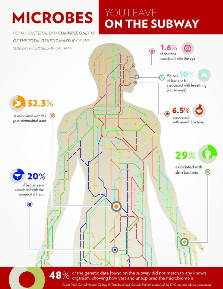 Waar komen de bacteriën die wij in de metro achterlaten precies vandaan?
