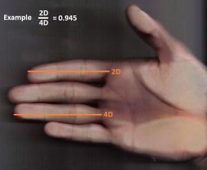 Deze man heeft een kleine wijsvinger en een lange ringvinger, waardoor de 2D:4D-index laag is. Dit wijst op meer testosteron.