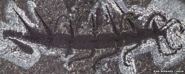 De kop van het zeediertje is links te zien en lijkt op een lepel.