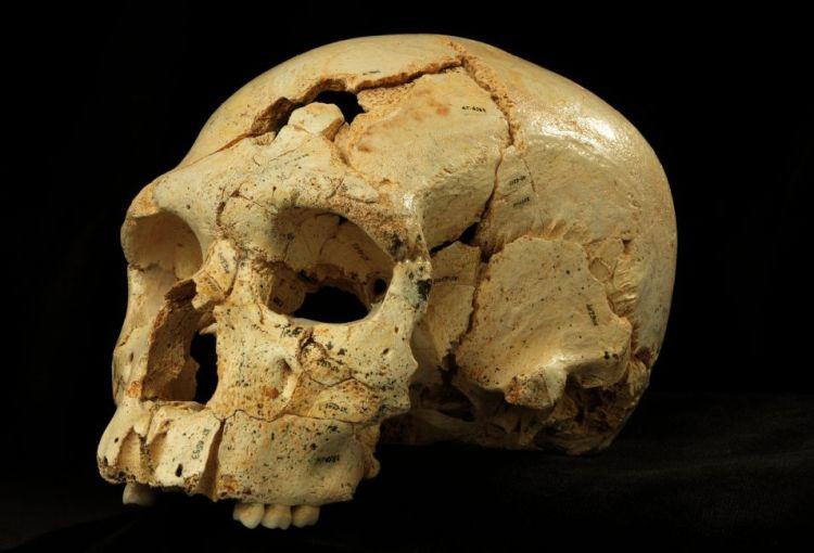 De schedel van een Neanderthaler