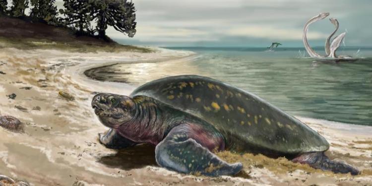 zeeschildpad3
