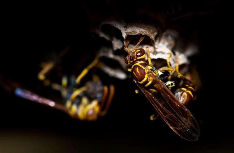 De bewegingen van een wesp, daar kan de gezondheidszorg weer van leren!