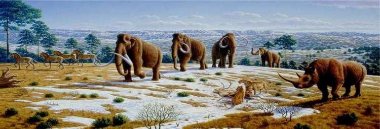 Mammoeten aan de wandel.