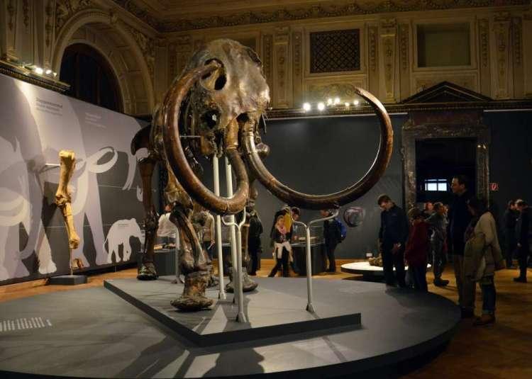 De resten van een wolharige mammoet in het museum. Op de kop en voeten is de huid van de mammoet nog zichtbaar. Afbeelding: Monika Ďuríčková (via Wikimedia Commons).