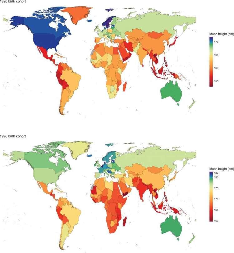 De gemiddelde lengte van mannen die in 1896 en in 1996 geboren werden. Afbeelding: eLife (http://dx.doi.org/10.7554/eLife.13410).