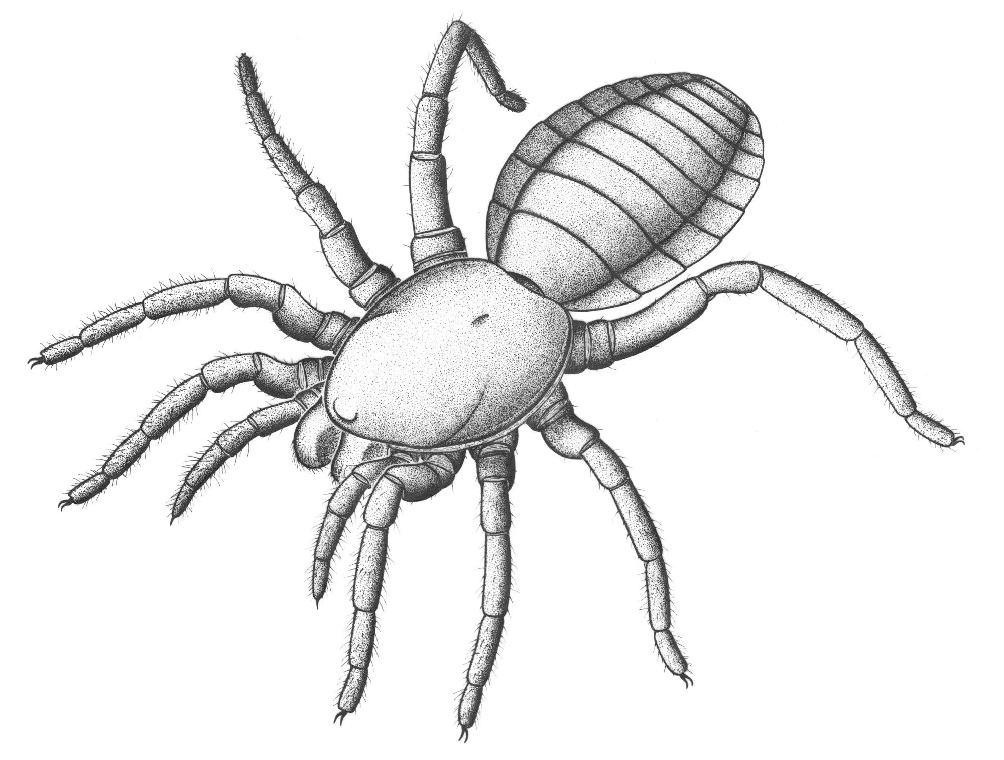 305 Million Year Old Almost Spider Unlocks Arachnid