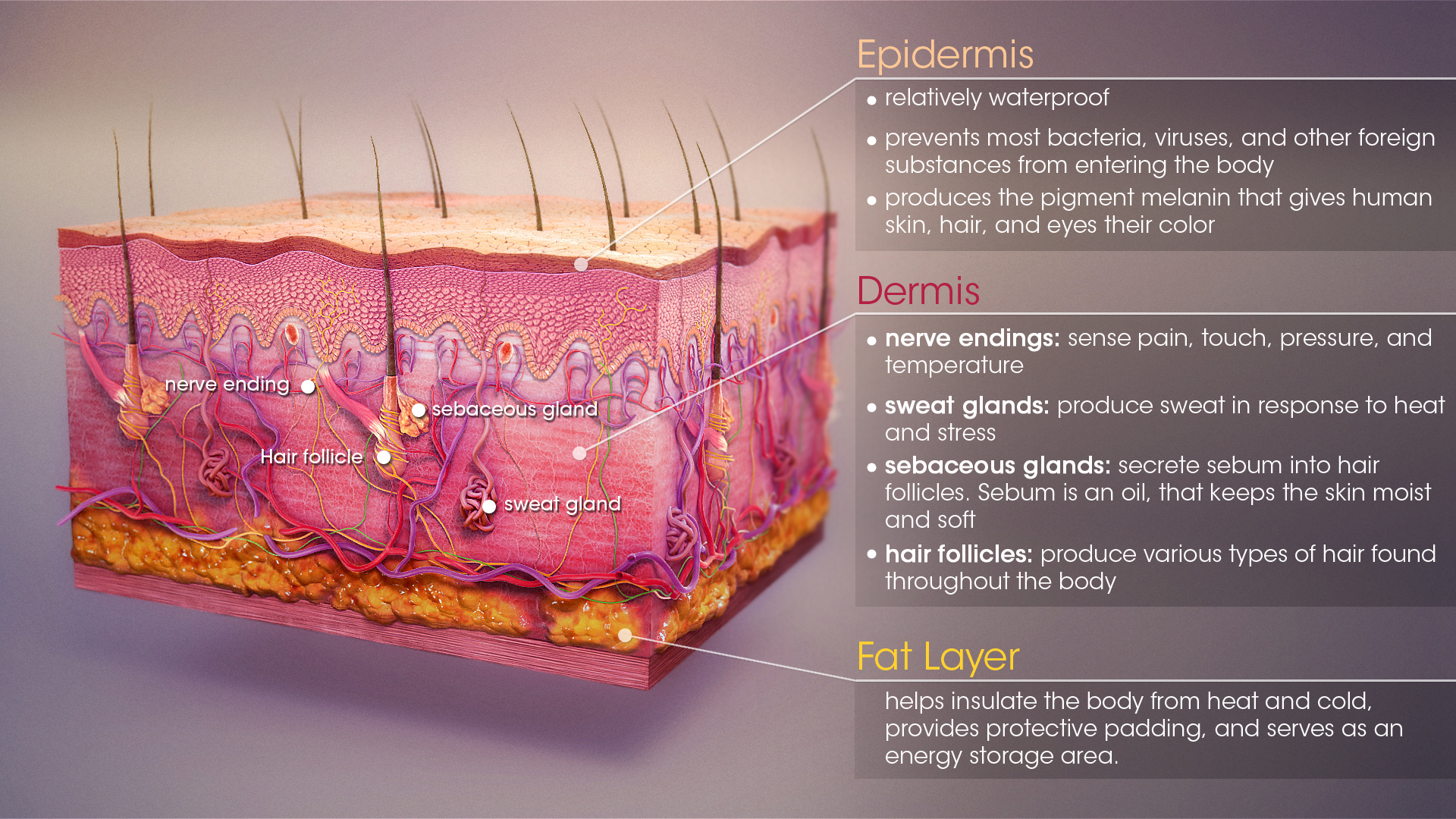 Skin Functions Conditions And Treatments