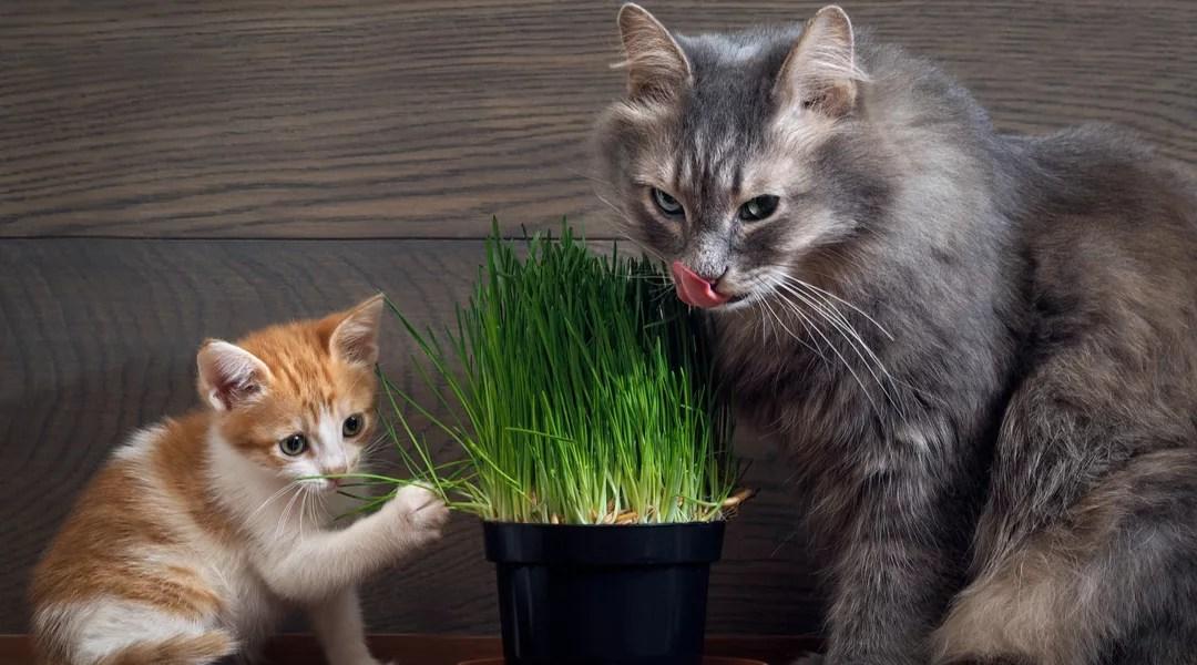 Gatti e… l'erba