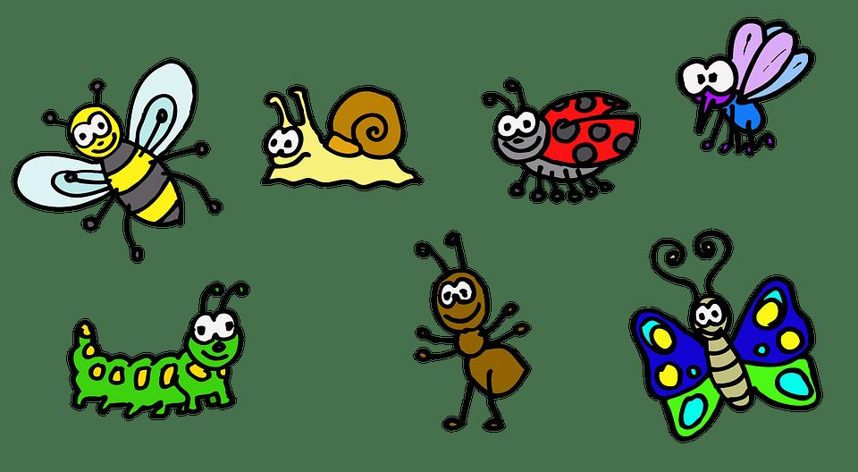 7 domande (e 7 risposte) sul meraviglioso mondo degli insetti