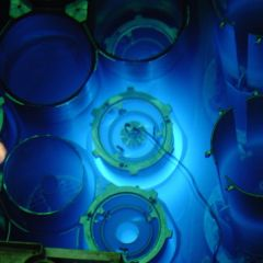 Più veloci della luce: L'effetto Cherenkov