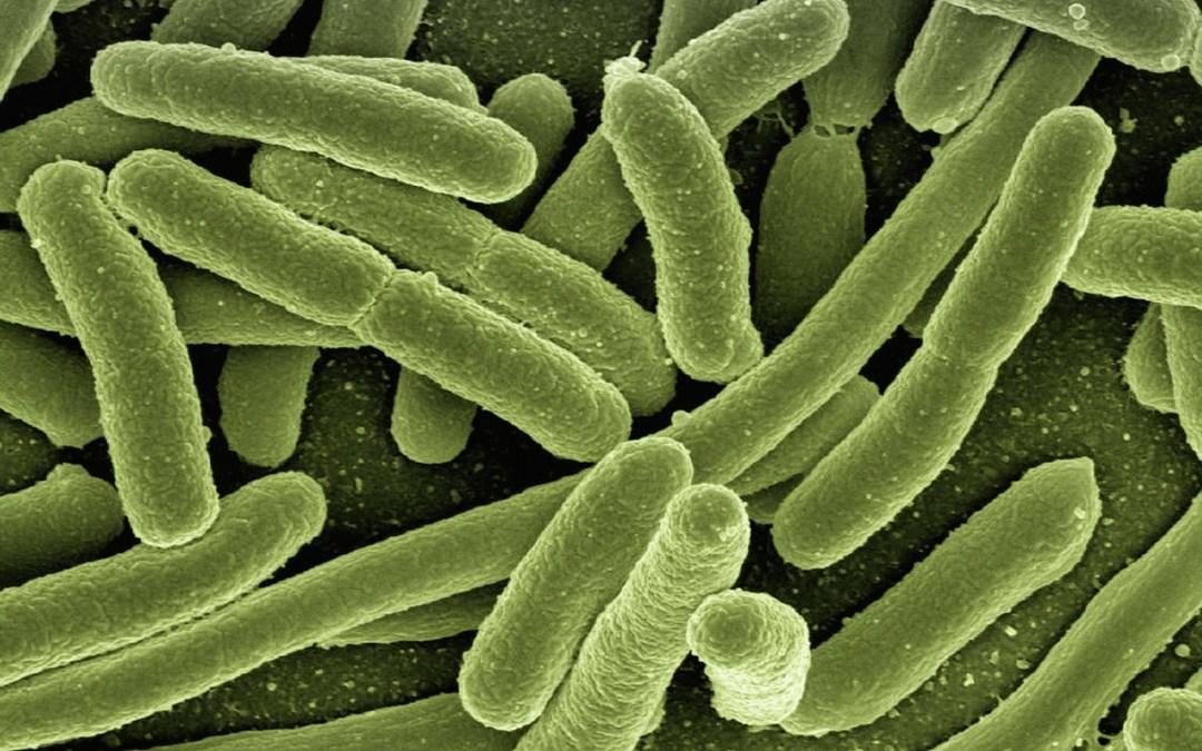 È più grande la capacità di adattamento dei batteri o la stupidità umana?