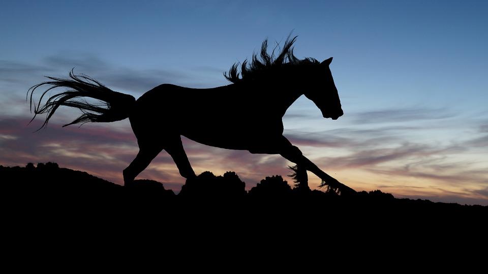 Correre come un cavallo e correre come un ghepardo