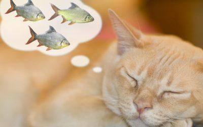 Chi (non) dorme non piglia pesci!