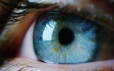 I 5 sensi: L'occhio e il sistema visivo