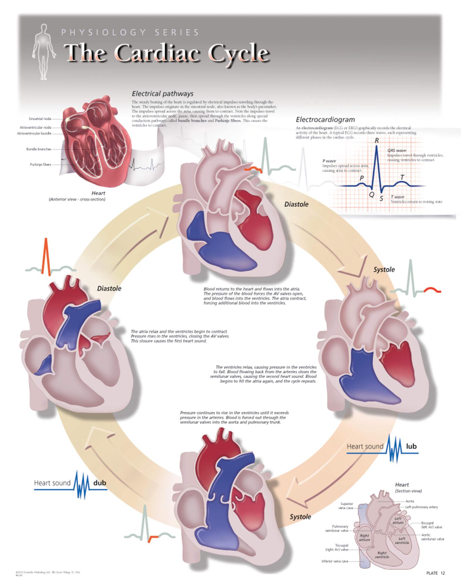 Vascular Education Worksheet