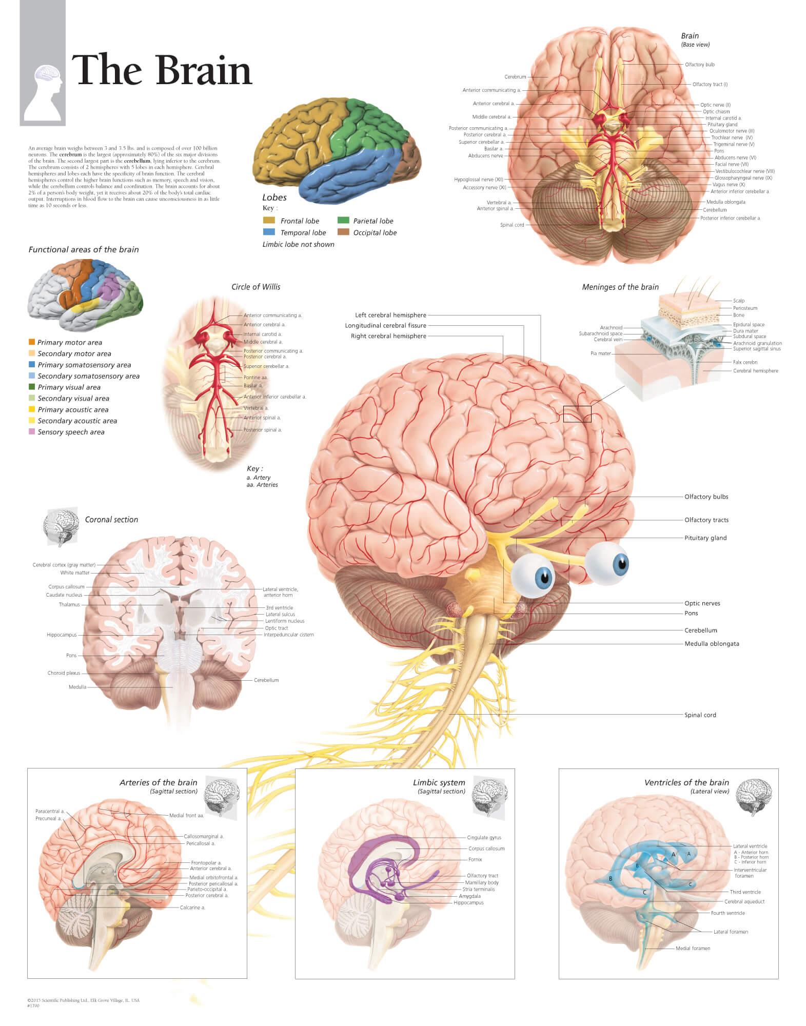 The Brain Scientific Publishing