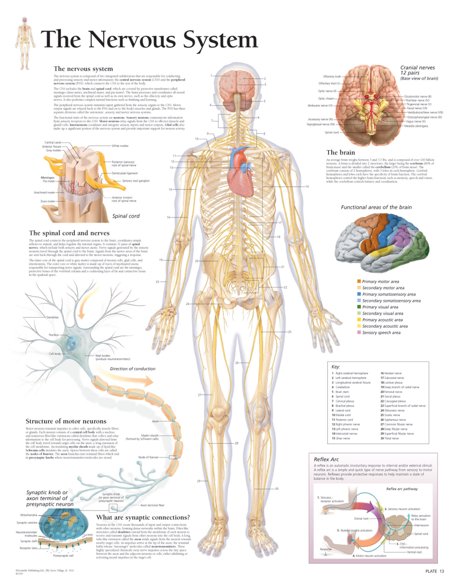 The Nervous System Scientific Publishing