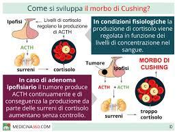 cush05
