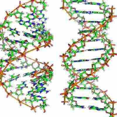 pd-genetica-adn