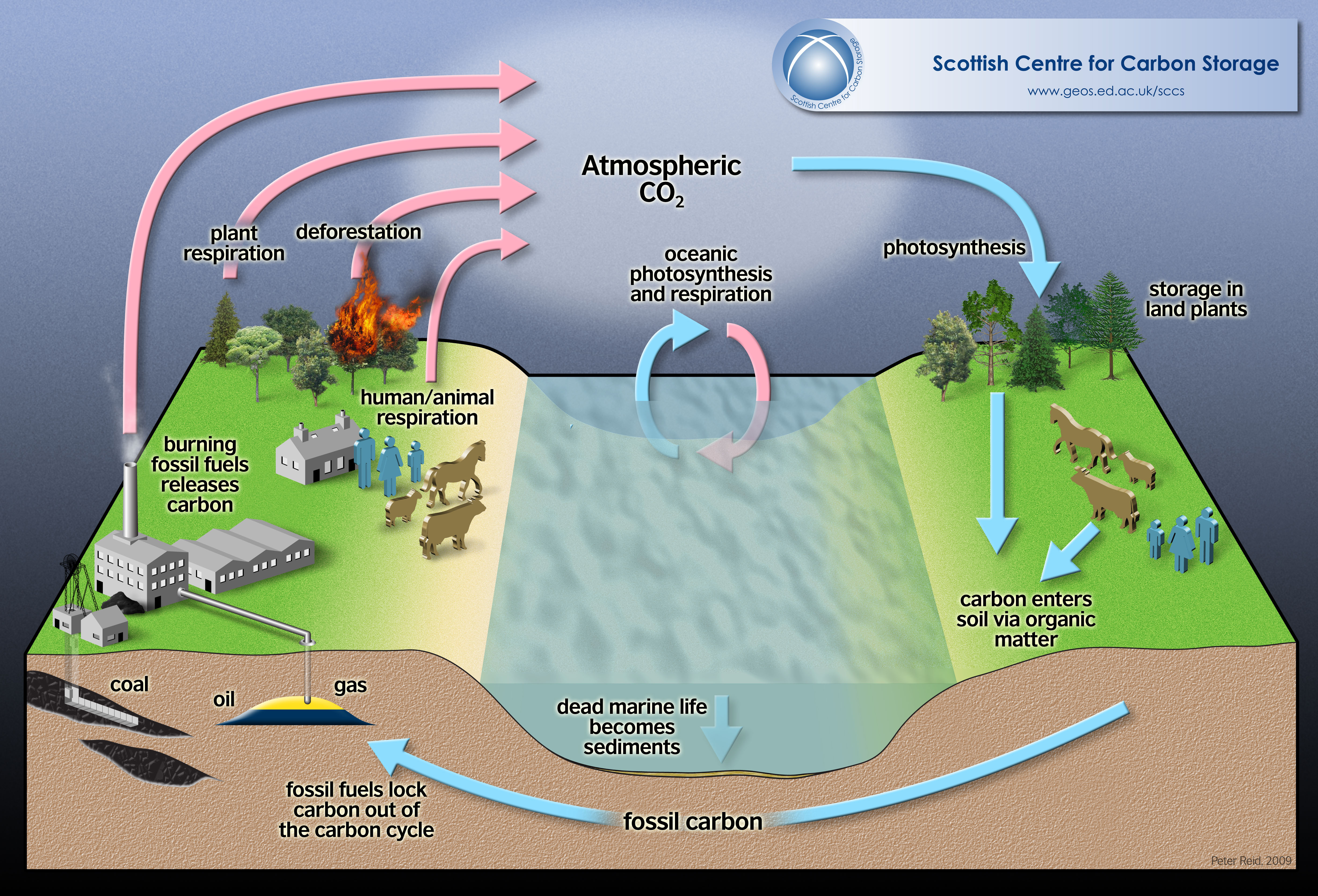 Water Carbon And Nitrogen Cycle Worksheet Answers