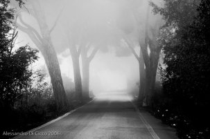 nebbia a trigoria - fog in trigoria