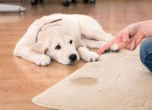 propreté chez le chien