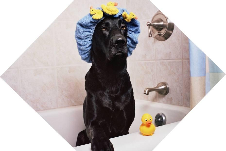 Comment baigner un chien