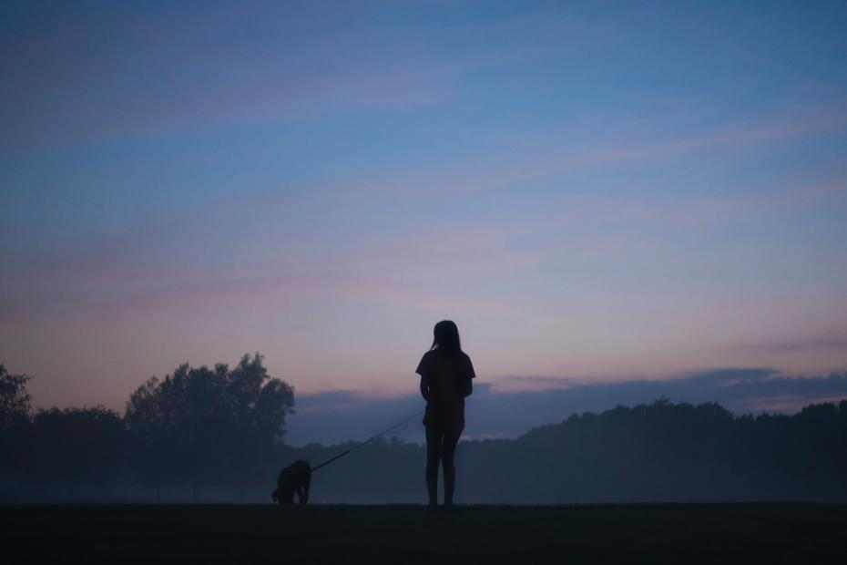 Promenade nuit chien