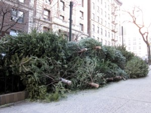 Bye, Christmas trees, you are no longer needed.