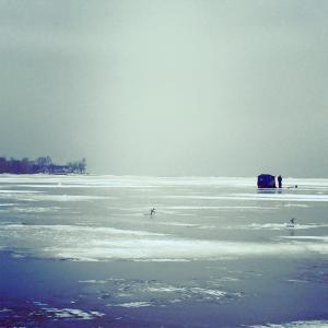 icefish1
