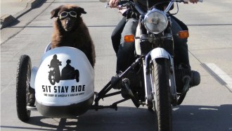 Sit Stay Ride