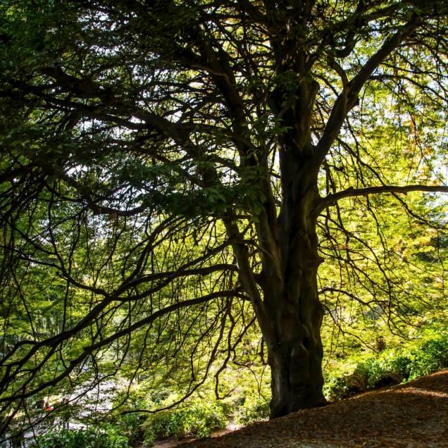 Parco della Burcina, Biella (Piemonte, Italia)_8