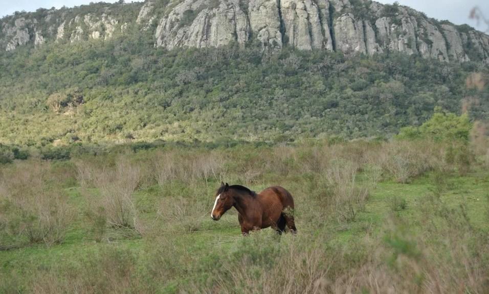 Uruguay (America del Sud)