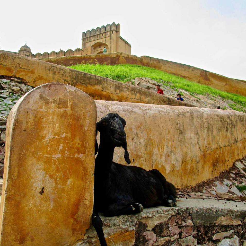 Amber Fort - India