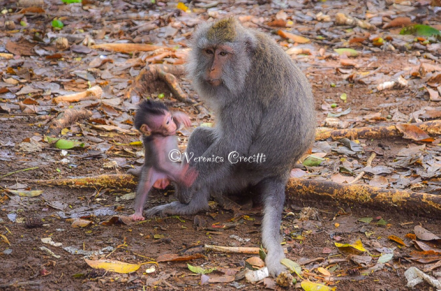 Foresta delle Scimmie (Sacred Monkey Forest) - Ubud, Bali, Indonesia