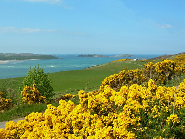 The wonderful colours of Scotland: YELLOW...
