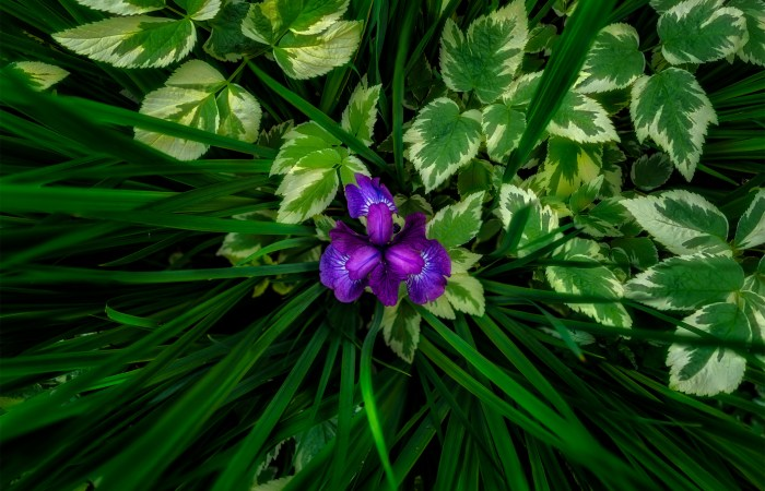An abstract photograph of a garden flower mixed with grasses and leaves. The flower is alone in the center and the leaves and grasses split down the middle