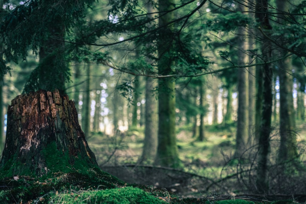dartmoor-burratorr-woods-magical-devon-photography