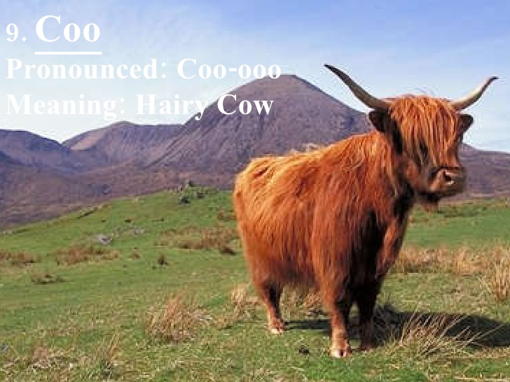 10 weird Scottish slang words and their meaning – Scottish Banter