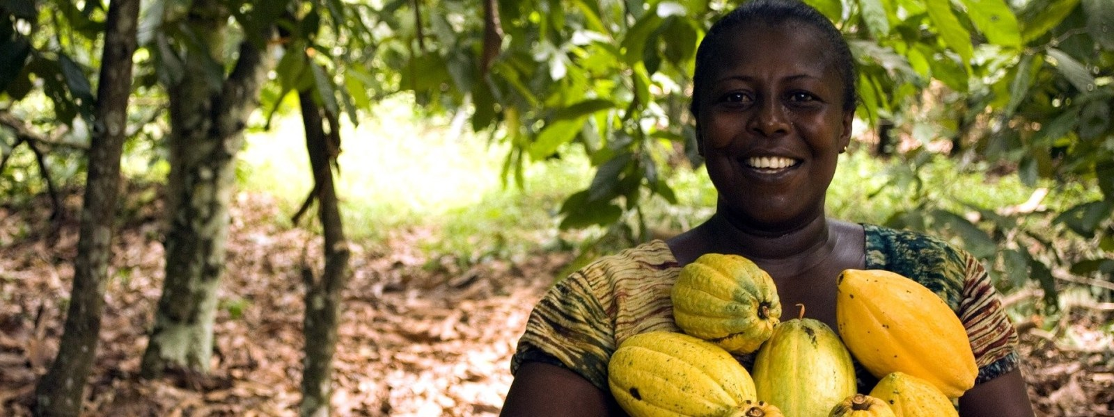 Female farmer smiling while holding a bunch of cocoa fruits