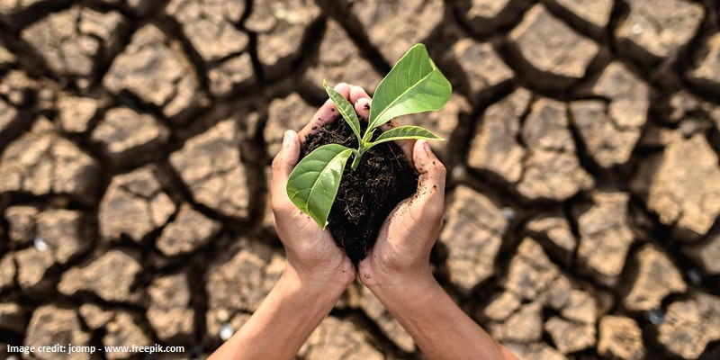 Showing the effects of climate change on crops: seed against dried ground