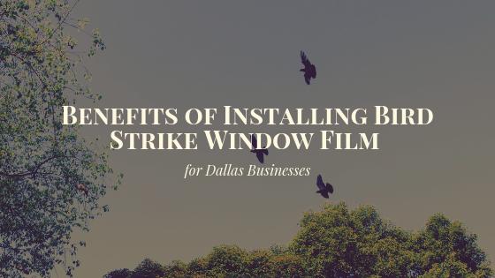 Benefits of Installing Bird Strike Window Film for Dallas Offices