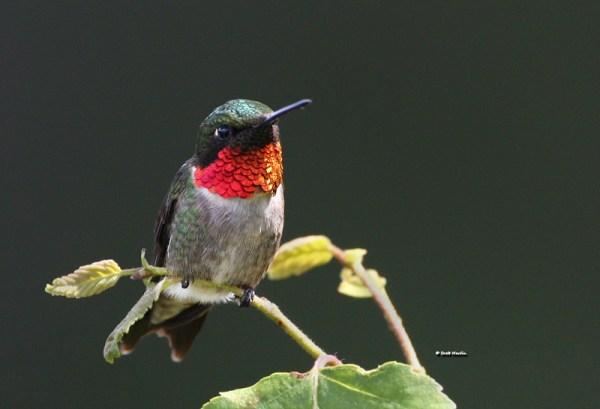 Hummingbirds | Scott Martin Photography