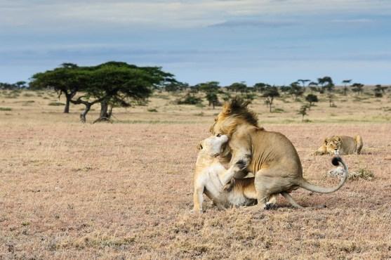 Mating Marathon