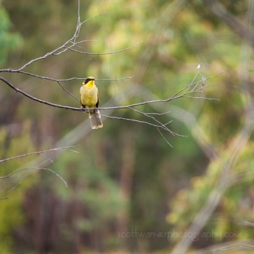 Birdlife on the Bald Rock Creek circuit